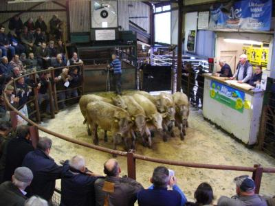 Lot 105 DS Thomas Penwern, Llanspyddid, 297kg £780