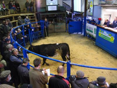 lot 11 from SE & EO Williams, Tanlan, 390kg £860