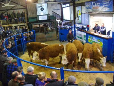 lot 75 from CG Richards, Upper Funglas, 456kg £890